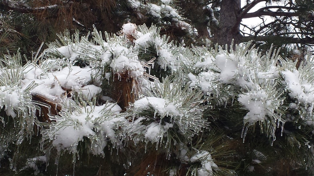 Icy Thorns