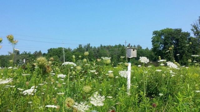 Birdhouse in the Field